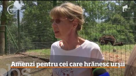 Autorităţile vor să-i amendeze pe cei care le dau de mâncare urșilor