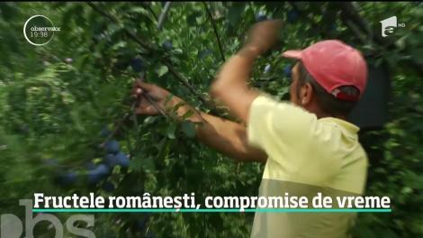 Vremea extremă pune în pericol şi fructele româneşti! Livezi întregi sunt aproape goale
