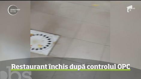 Un control fulger la un restaurant din Lugoj a scos la iveală nereguli grave