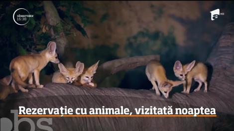 Rezervație cu animale sălbatice, vizitată noaptea