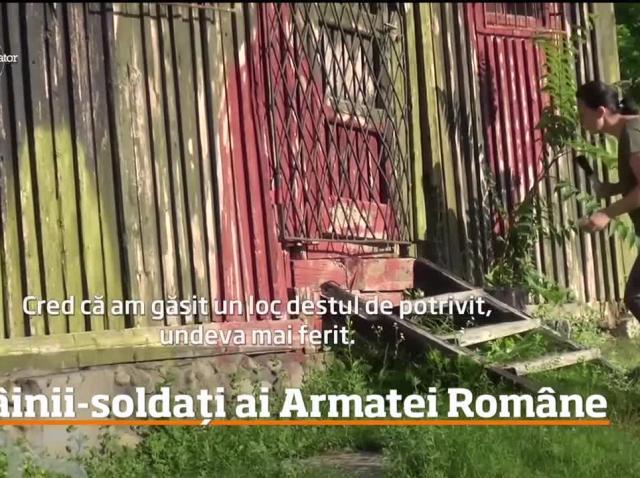 Ei sunt câinii-soldați din Armata Română! Cum arată o zi de antrenament pentru eroii patrupezi (VIDEO)