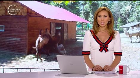 Tratament special pe timp de caniculă pentru animalele de la Grădina Zoologică din Ploieşti