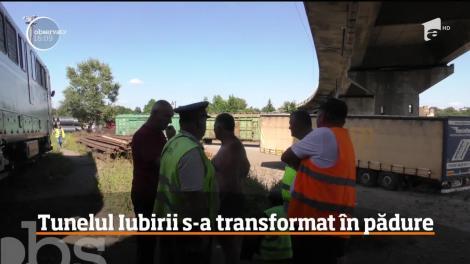 Tunelul Iubirii din Caraş Severin s-a transformat în ultimii ani într-un hăţiş
