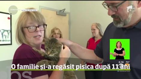 Bucurie mare într-o familie din statul New York, care şi-a regăsit pisica dispărută cu nu mai puţin de 11 ani în urmă
