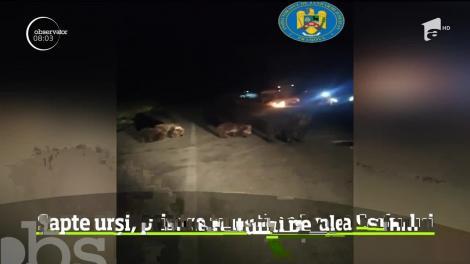 Panică printre turiştii campaţi în zonă Valea Cerbului din Buşteni! Șapte urși au venit în căutare de hrană