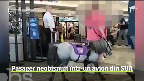Pasager neobişnuit într-o cursă aeriană din Statele Unite: un ponei a zburat în cabină