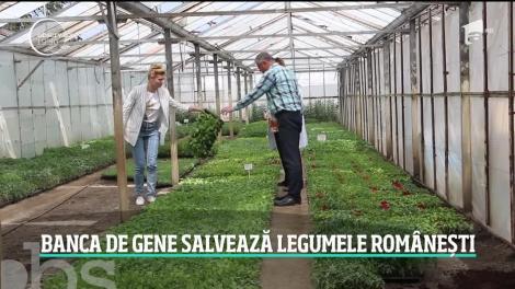 România va avea pentru prima dată în istorie o bancă genetică pentru plante, în Buzău!