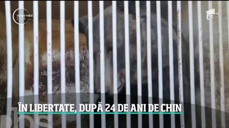 Două ursoaice salvate dintr-un circ din Ucraina vor descoperi libertatea în România. Povestea Mashei şi Laurei