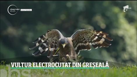 Un vultur care a supravieţuit în zone de război și deșert a murit electrocutat în România. Pasărea era monitorizată din 2017