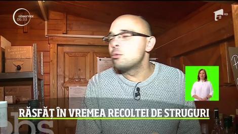 Răsfăț în vremea recoltei de struguri la a 19-a ediţie a festivalului Simfonii de Toamnă, de la Târgu Mureş