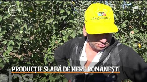 Producție slabă de mere românești, în județul Mehedinţi