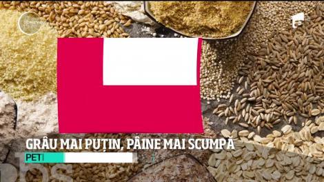 Agricutorii anunță scumpirea pâinii! Seceta a afectat culturile de grâu. Producţia e mai puţină şi de o calitate mai slabă