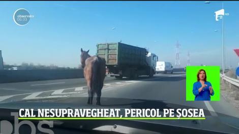 Un cal nesupravegheat şi-a făcut apariţia pe unul dintre drumurile intens circulate din Braşov