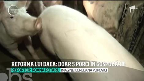 """Ministrul Agriculturii stârnește revoltă printre românii de la sate! Ce trebuie să facă cei care vor să crească porci: """"Să-și ia autorizație și să plătească taxe!"""""""