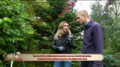 Neatza cu Răzvan și Dani. Cum se plantează și îngrijește gazonul