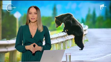 Urşii au devenit o ameninţare nu doar în oraşe şi staţiuni, ci şi pe autostrăzi şi pe calea ferată!