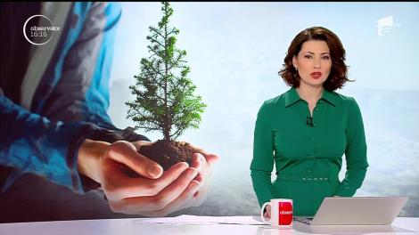 Pădurile României trebuie salvate! Peste o mie de elevi din Braşov au plantat câte un brăduţ într-un ghiveci