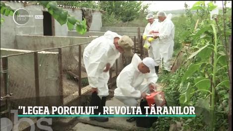 Ţăranii se revoltă după ordinul care limitează numărul de porci în gospodărie