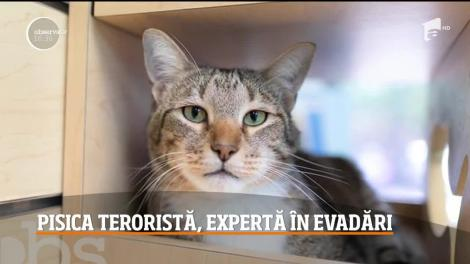 Pisica din Statele Unite, expertă în evadări