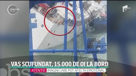 O navă cu 15 mii de oi la bord s-a scufundat în portul Midia