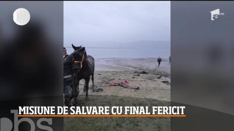 Cal împotmolit până la gât în albia râului Argeș, salvat de către pompieri