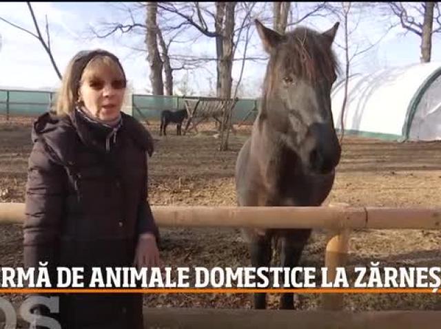Animalele domestice ieşite la pensie pot fi văzute la o fermă din Zărnești