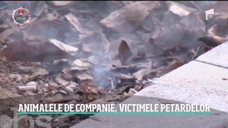 Animalele de companie, victimele petardelor