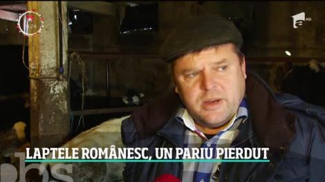 Fermele de vaci, pe cale de dispariţie în România