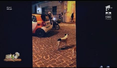 Smiley News - Neatza cu Răzvan și Dani. Mașina, motocicliștii și câinii