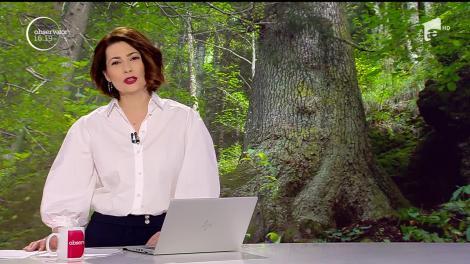 Bradul de 500 de ani din Munţii Cindrel concurează pentru titlul de Arborele European al Anului 2020