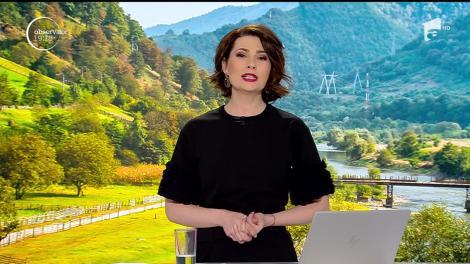 Gândacii care blochează construcția autostrăzii Sibiu- Piteşti, mutați cu ajutorul feromonilor. Specialişti au o altă părere