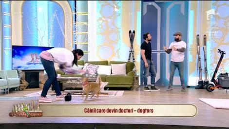 Neatza cu Răzvan și Dani. Câinii care devin doctori - dogtors