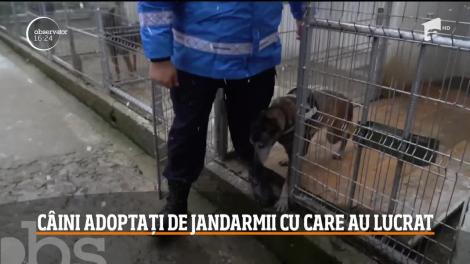 Doi câini din rasa ciobănesc belgian, care au ajuns la pensie, au fost adoptaţi de jandarmii