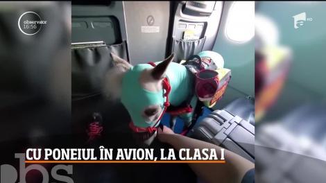 Cum a ajuns un ponei să zboare cu avionul, în Statele Unite