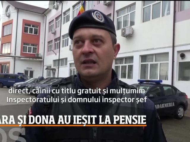 Zara şi Dona, două căţeluşe ale Jandarmeriei Bistriţa-Năsăud, au ieşit la pensie
