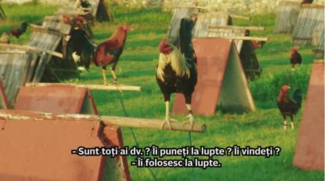 """Speak și Ștefania, calătorie într-un coteț pe patru roți: """"Am găsit o mașină plină cu găini pe care trebuia să le ținem în brațe"""""""
