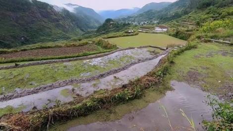 """Plantatul orezului e o muncă greu de imaginat! Alexandru Abagiu de la Asia Express: """"Dacă trăiesc viermii în el, merge şi pe faţa mea!"""""""