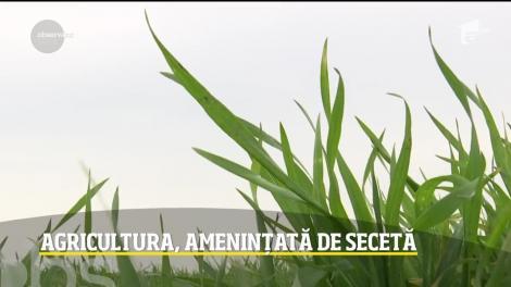 Agricultura, amenințată de secetă