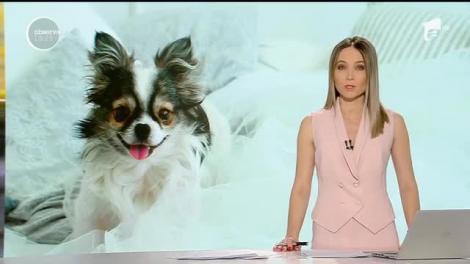 """Soluţiile folosite pentru dezinfecţia străzilor şi a trotuarelor, otravă pentru animale! Ce trebuie să facă stăpânii, pentru a le feri de pericole: """"Câinele meu a murit! S-a dus în câteva secunde"""""""