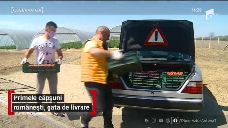 Cât costă un kilogram de căpşuni româneşti