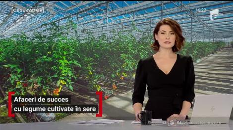 Afaceri de succes cu legume cultivate în sere