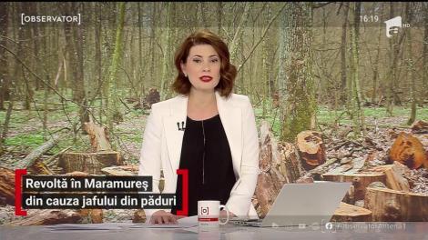 Revoltă în Maramureş din cauza jafului din păduri