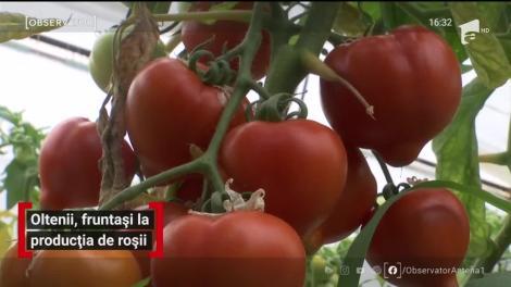 Oltenii, fruntași la producția de roșii