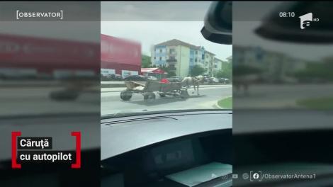 Nu ești șmecher dacă n-ai căruță cu pilot automat! Imagini senzaționale, în Deva: Un căruţaş a fost surprins adormitla hăţuri