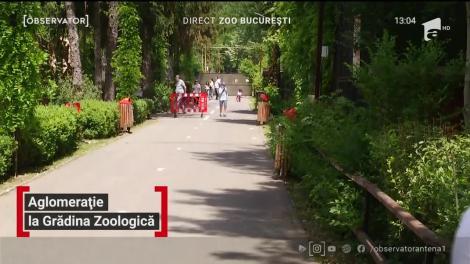 Aglomeraţie la Grădina Zoologică