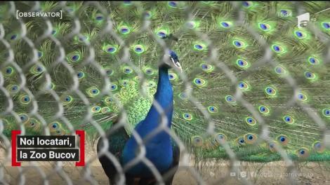 Grădina zoologică din Prahova s-a umplut de pui