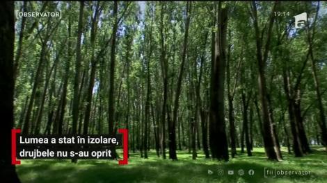 Drujbele nu stau departe de pădurile României nici în pandemie. Doar în Dolj, trei hectare de pădure au fost puse la pământ