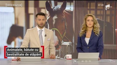 Imagini şocante surprinse în Suceava. Doi bărbaţi au bătut, cu bestialitate, un cal