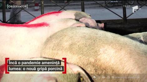 O nouă pandemie ameninţă lumea: gripa porcină