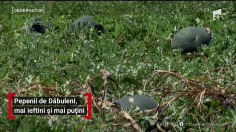 Pepenii de Dăbuleni au luat drumul pieţelor. Efectele grindinei taie însă din profiturile producătorilor